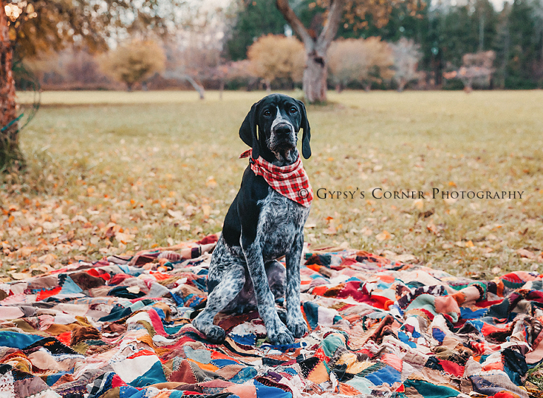 Buffalo NY Pet Photography| Dog Portrait at Amherst State Park